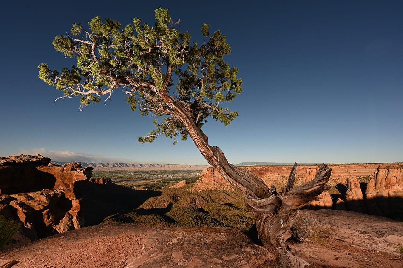strom a kopce