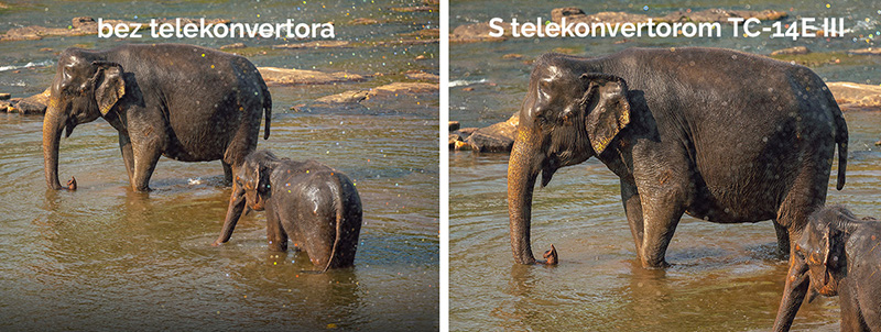Slon a sloníča